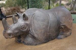 rhino_pic